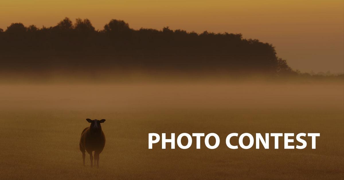 Free Photo Contest